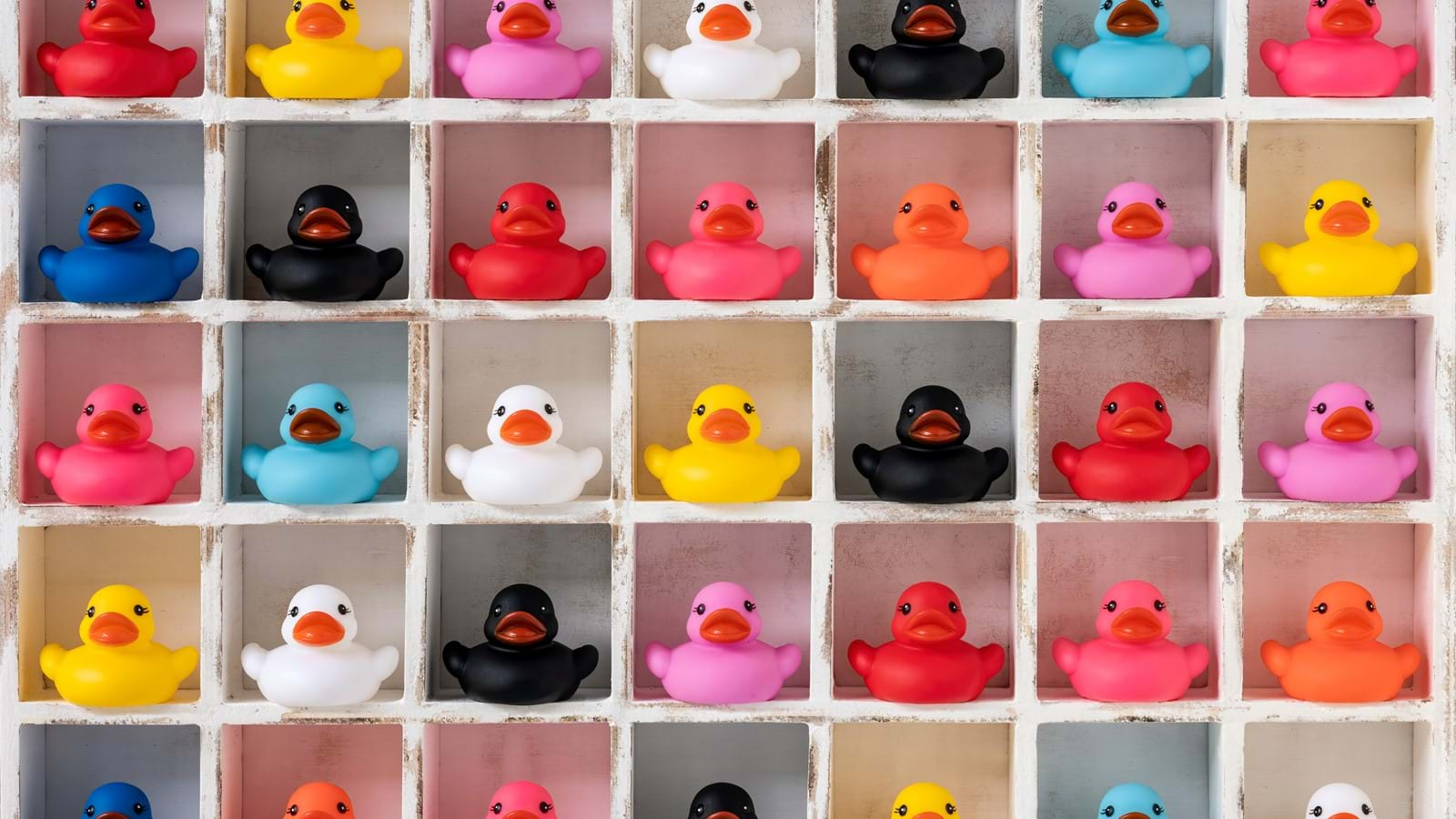 Coloured ducks on a wall symbolizing diversity